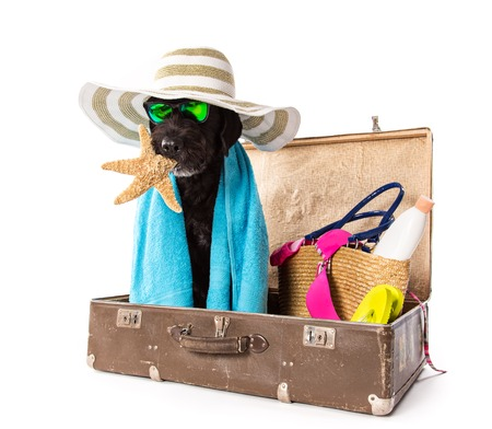 Funny summer black dog with summer accessories. Funny summer concept. Stock Photo