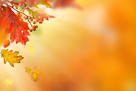 rust red: Beautiful autumn background with color leaves