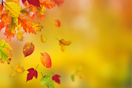 changing colors: Beautiful autumn background with color leaves