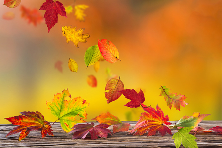 Beautiful autumn background with color leaves