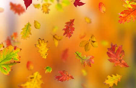 autumn color: Beautiful autumn background with color leaves
