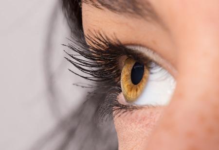 long eyelashes: Woman eye with long eyelashes. Macro shot.