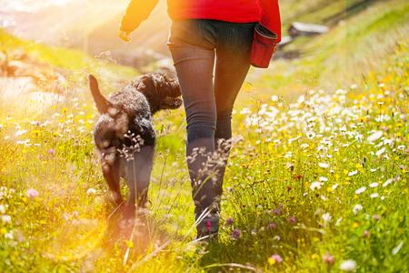 草原の上を歩く彼女の犬を持つ若い女性。