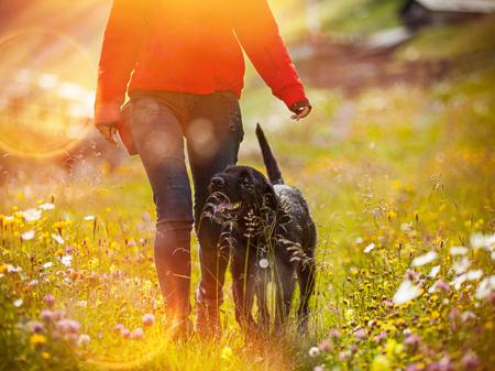 Junge Frau mit ihrem Hund auf Wiese gehen.