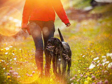 leashes: Young woman with her dog walking on meadow. Stock Photo