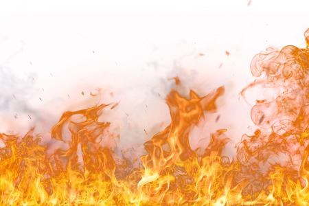 flammable: Fire flames on white background, close-up.
