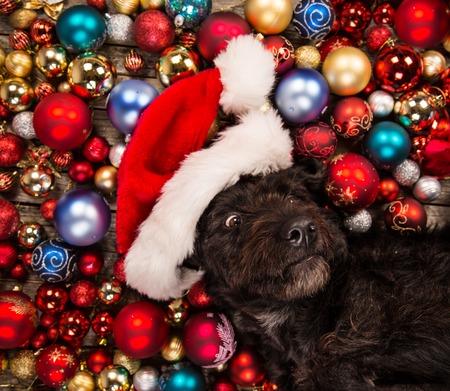 Perro negro en el equipo de santa y bolas de Navidad. Foto de archivo