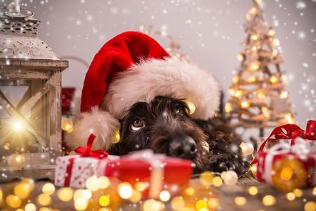 Cane nero in abito di Santa e regali di Natale Archivio Fotografico - 64975069