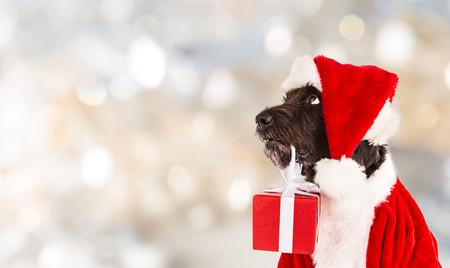 Zwarte hond in Kerst outfit en Kerstmisgiften Stockfoto