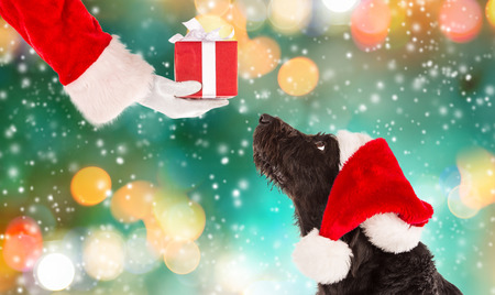 Black dog in santa outfit and christmas gifts Stock Photo