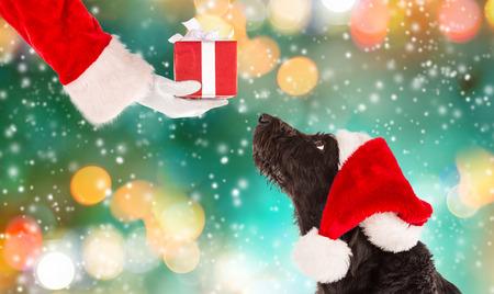 Perro negro en traje de Santa y de la Navidad Foto de archivo