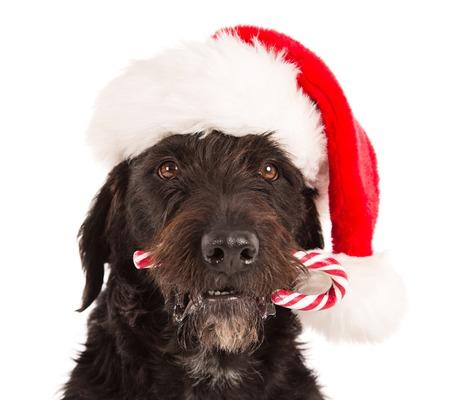 perros vestidos: Perro negro en traje de Santa y de la Navidad Foto de archivo
