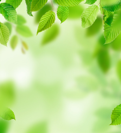 Background of green leaves, close-up. Stockfoto