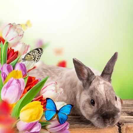 easteregg: Easter bunny and Easter eggs on green grass