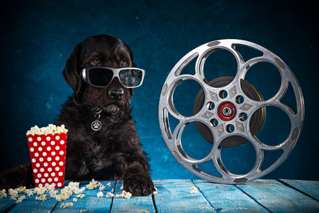 Black funny dog withRetro film production accessories.