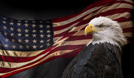 American Bald Eagle con bandiera. Archivio Fotografico - 72883082