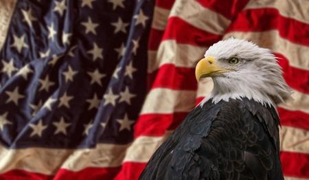 Águila calva americana con la bandera. Foto de archivo