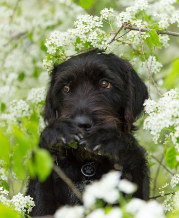 Cute black mutt dog with funny face sitting on spring meadow. Stock Photo