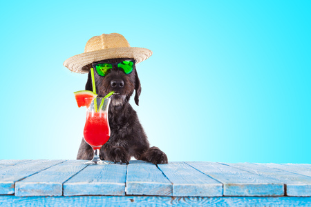 Black mutt dog posing with colorful cocktail. Stock Photo