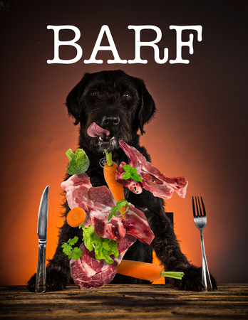 Hungry black mutt dog with fork and knife ready to eat dinner or lunch. Stock Photo
