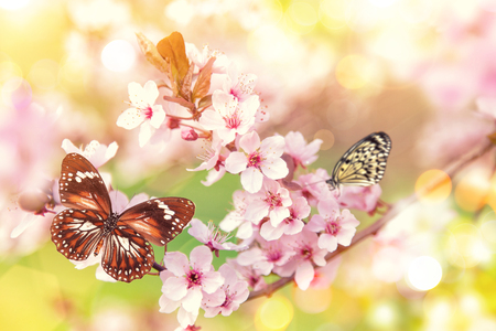 Spring blossoms with exotic butterfly.