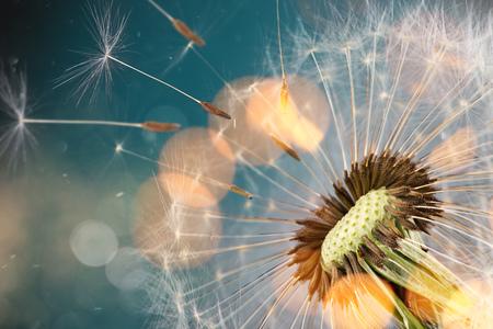 Close-up of dandelion seeds on blue natural background Stockfoto