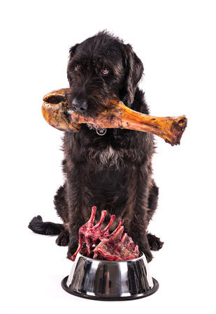 Black dog with bowl full of raw meat isolated on white background