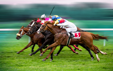 Race horses with jockeys on the home straight Foto de archivo