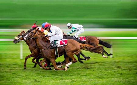 Race horses with jockeys on the home straight Stok Fotoğraf