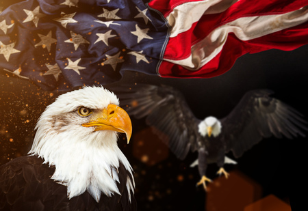 星条旗と白頭鷲 写真素材