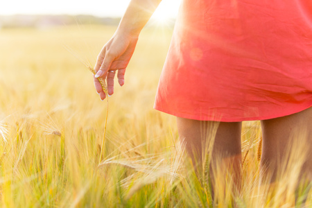 Girl in red dress walking on wheat field. Harvest theme. Stock Photo