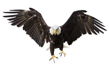 アメリカの国旗を飛ぶハクトウワシ