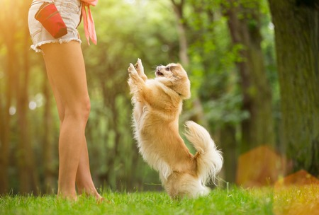Young woman with her dog tibetian spaniel playing outdoor during summer day.