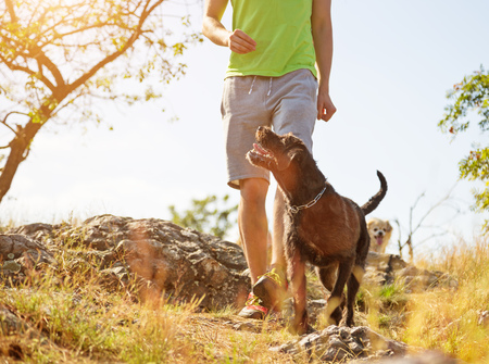 Jonge man met zijn hond wandelen buiten tijdens de zomerdag.