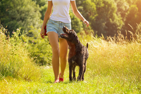 Young woman with her dog walking outdoor during summer day. 版權商用圖片