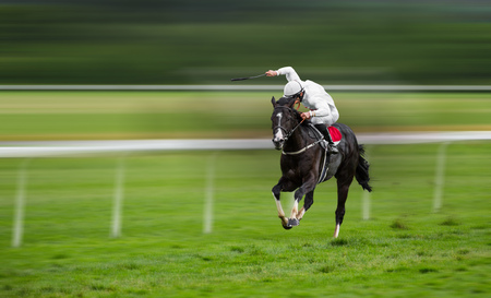 bets: Race horses with jockeys on the home straight. Shaving effect.