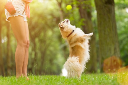 Young woman with her dog tibetian spaniel playing outdoor during summer day. Stock fotó - 82609488