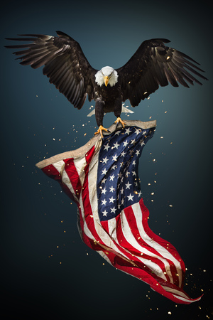 アメリカ国旗を掲げて飛んでいる白頭ワシ 写真素材