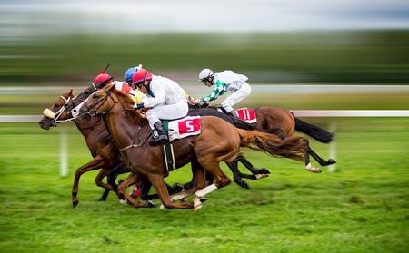 Caballos de carreras con jinetes en la recta local Foto de archivo