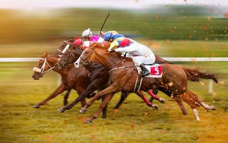 ホーム ストレートの騎手と競走馬 写真素材