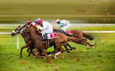 Race horses with jockeys on the home straight Stock Photo