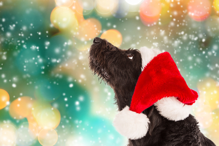 Black dog in santa outfit. Bokeh blurred background. Stock Photo