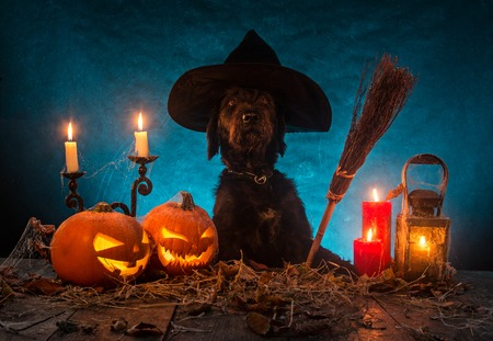 Black dog with Halloween pumpkins on wooden planks. Cemetery grave stones on background Stockfoto
