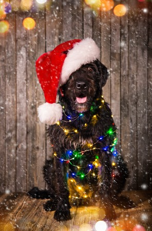 Black dog with christmas gifts on old wooden ground.