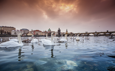 Prague Charles bridge during sunrise. Central Europe, Czech republic.