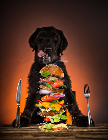 Hungry black mutt dog with fork and knife ready to eat dinner or lunch. Portrait photo. Reklamní fotografie