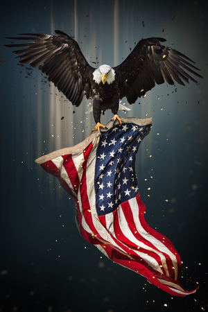 American Bald Eagle flying - symbol of america -with flag. United States of America patriotic symbols.