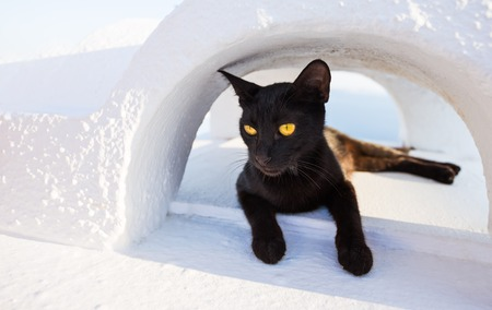 Close-up of cat on Santorini island, Greece, Europe. Banco de Imagens