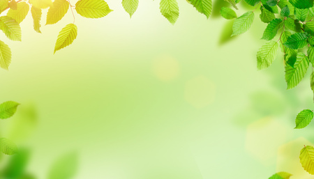 Green leaves border with copy space, spring background.