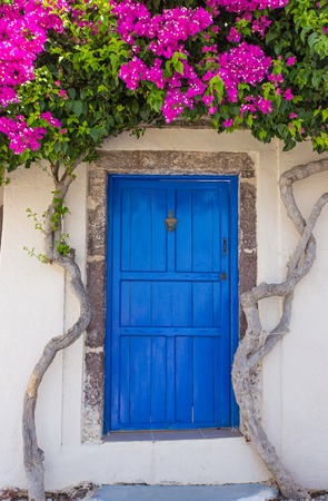 Beautiful blooming bougenvilia with traditional old blue door in old village Emporio on the island of Santorini in Greece.